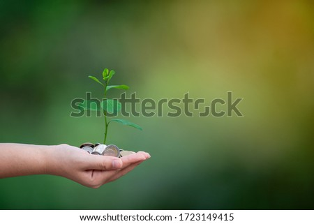 Planting trees using coins on their hands. Business growth concept. Money that is not worth the destruction of the environment. Stockfoto ©