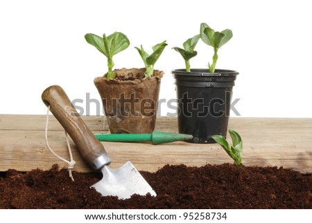 Planting vegetable seedlings from pots into the ground - stock photo
