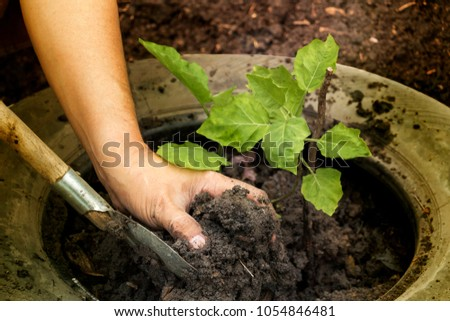 Planting young tree by man's hand gardeners to be planted into the soil with beautiful sun light in plantation field. Concept natural ecology. #1054846481