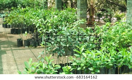 Plants #683164162