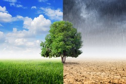 Plants and climate change with the concept of global warming.