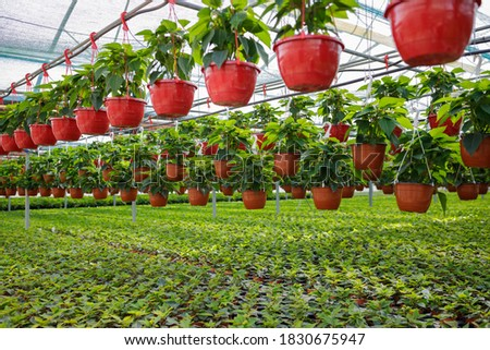 Plants and flowers in the sunny greenhouse or horticulture Foto stock ©