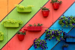 Plants and flowers in wooden and plastic pots on colorful painted background. Green wall, eco friendly vertical garden. Potted plants in outdoor garden