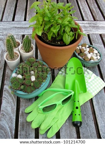 Plants and garden accessories