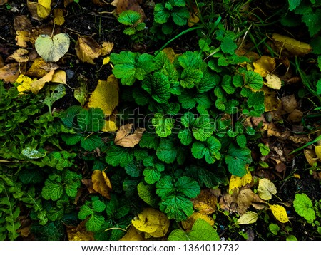 Plants and leaves on the earth the top view #1364012732