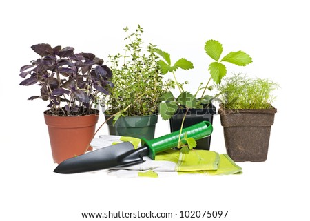 Plants and seedlings with gardening tools isolated on white