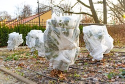Plants and trees in a park or garden covered with blanket, swath of burlap, frost protection bags or roll of fabric to protect them from frost, freeze and cold temperature