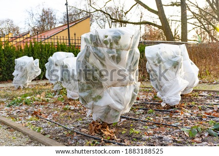 Plants and trees in a park or garden covered with blanket, swath of burlap, frost protection bags or roll of fabric to protect them from frost, freeze and cold temperature Stockfoto ©