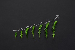 Plants are growing on black background with chart. Concept of green business growth, profit, development and success. Eco  and environment.