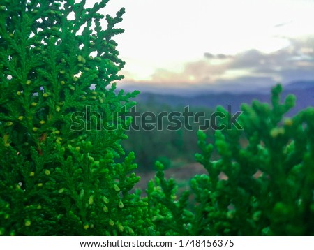 Plants are mainly multicellular, predominantly photosynthetic eukaryotes of the kingdom Plantae. Historically, plants were treated as one of two kingdoms including all living things that were not anim Foto stock ©