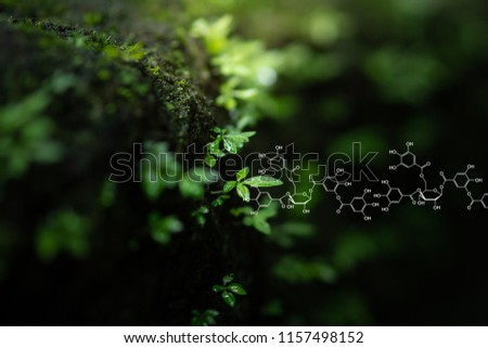 Plants background with biochemistry structure. Shallow DOF. Copy space using as background or input any text as you wish. Natural and science concept.