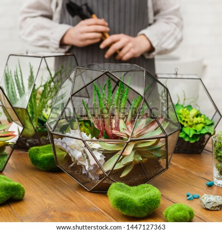 Plants compositions in glass florariums and moss stones on wooden table and woman standing behind. Professional florist concept #1447127363