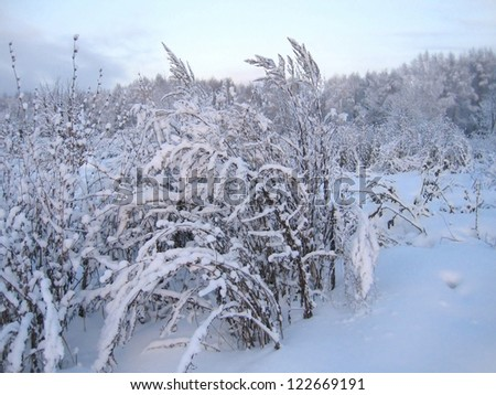Plants covered with a snow