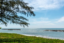 Plants covering foreshore of pristine beach, Rayong, Thailand