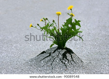 Plants emerging through hard asphalt. Illustrates the force of nature and fantastic achievements.