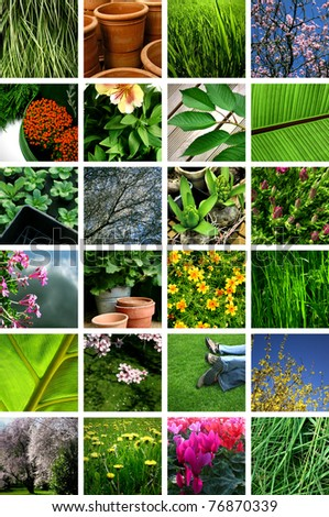 Plants et flowers collage