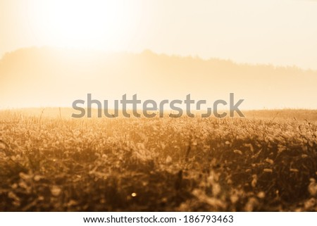 plants for natural background, nature series #186793463