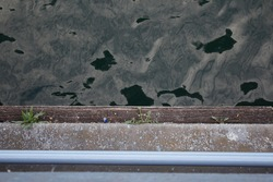 Plants greening on the boards by the sea (linear image)