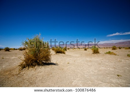 Plants grow sparsely in the Devil's Cornfield section of Death Valley National Park.