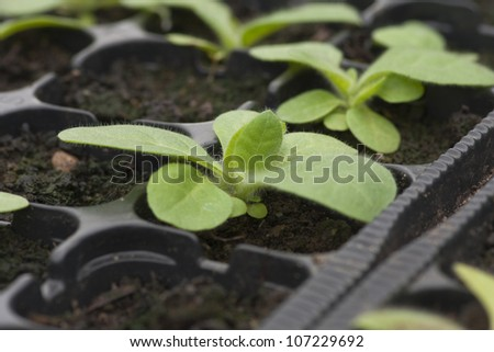 Plants growing in greenhouses. Shallow depth of field.