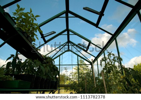 Plants growing inside a greenhouse glasshouse on shelves in a garden