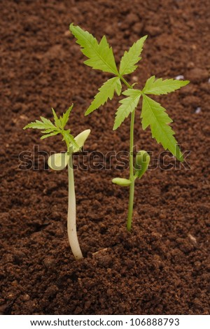 Plants growing stages-Beginnings