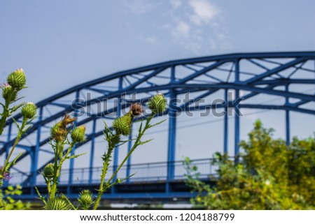Plants in foreground and bridge in background #1204188799