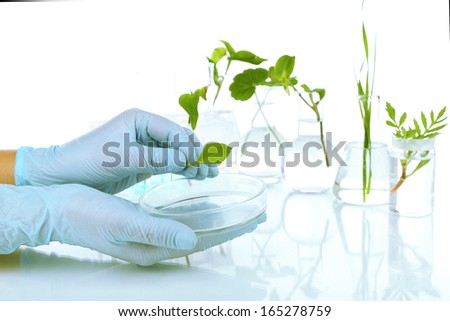 Plants in test tubes isolated on white
