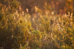 Plants in the field on sunset. Natural summer and spring background