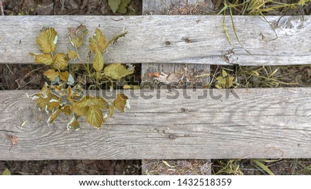 plants make their way through wooden planks