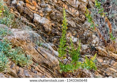 Plants on layered rocks #1343360648