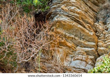 Plants on layered rocks #1343360654