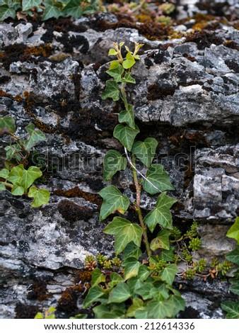 Plants on Rocks. Intended Blurredness