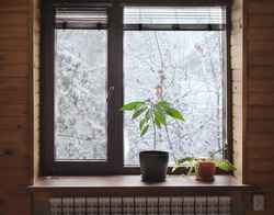 plants on the window sill and winter landscape outside the window
