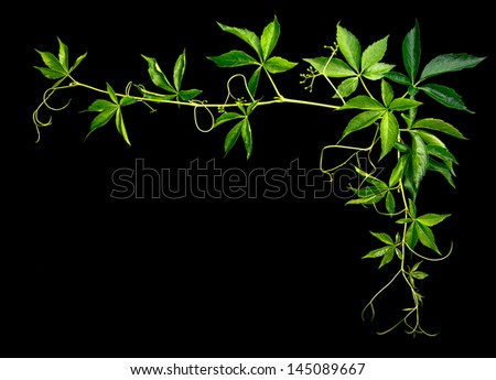 plants ornament on a black background