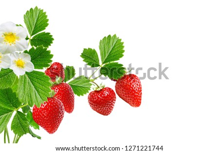 plants strawberry with ripe berries