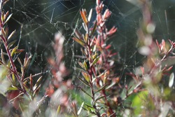 Plants surrounded with intricate spiderwebs