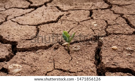 Plants that are born in dry ground,Broken ground,dryness,Ground that lacks water                                #1471856126