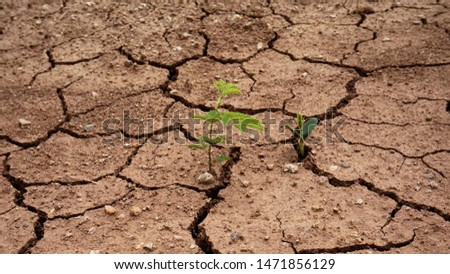 Plants that are born in dry ground,Broken ground,dryness,Ground that lacks water                                #1471856129
