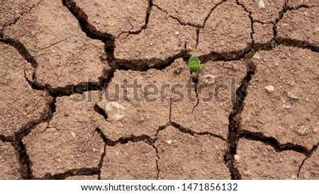 Plants that are born in dry ground,Broken ground,dryness,Ground that lacks water                                #1471856132