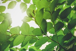 Plants with sunlight on sky background vintage color