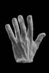 plaster limb, male hand with fingers