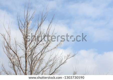 Plastic bags on the branches of trees,Nature ecology catastrophe #1303730590