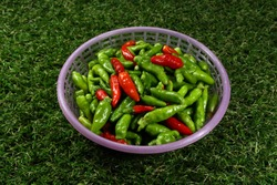 Plastic basket of fresh organic red and green Thai Chilly on the grass field. Main ingredient in hot and spicy food in Asia. Small and tiny chilly.