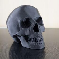 plastic black skull on a white background