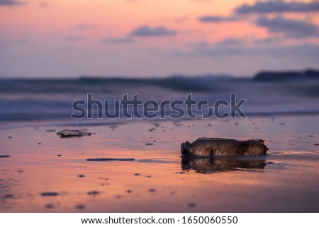Plastic bottles placed on the beach and clams and insects live on the bottles.  With beautiful sunrise and cloud. Concept to save the world.  garbage that has been thrown by humans.