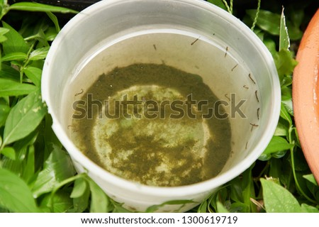 plastic container with stagnant water and become mosquitoes breeding ground