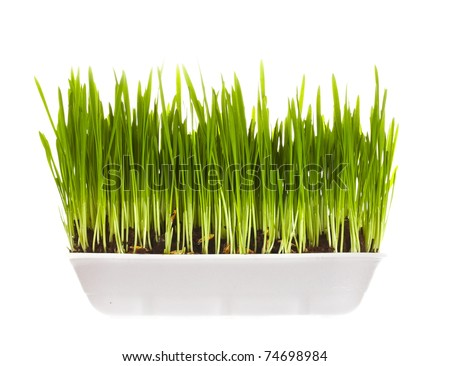 plastic container with young green sprouts, it is isolated on a white background