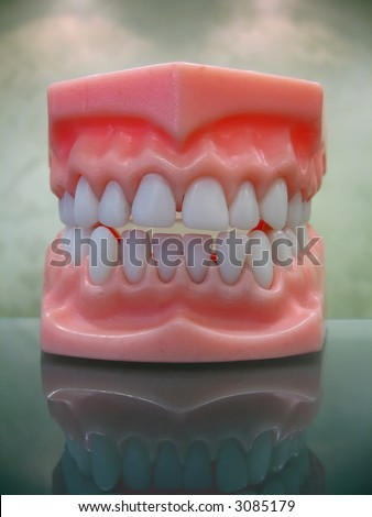 Plastic dental teeth model on a reflective glass surface.