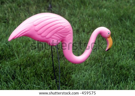 Plastic Flamingo on lawn